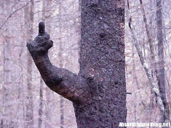 Illusione albero dito