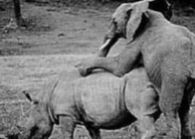 Anche gli animali sbagliano (5)