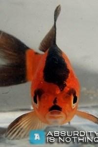 Pesce simile a Hitler