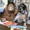 Suryia e Roscoe (2)
