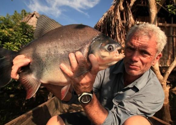 Pacu, il pesce tagliatore di palle (1)