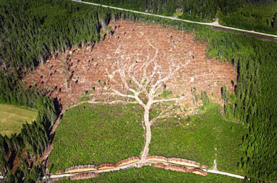 Hurricane Tree