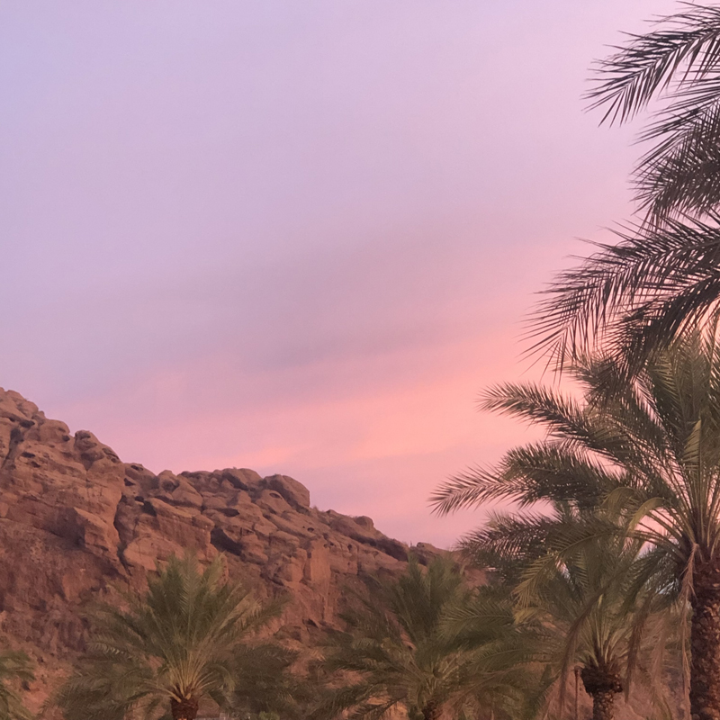 pink sunset in arizona over camelback mountains and palm trees