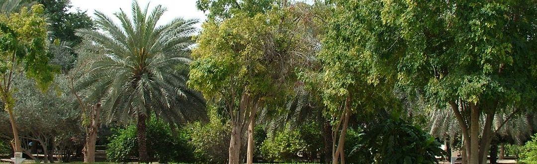Al Ain városnézés