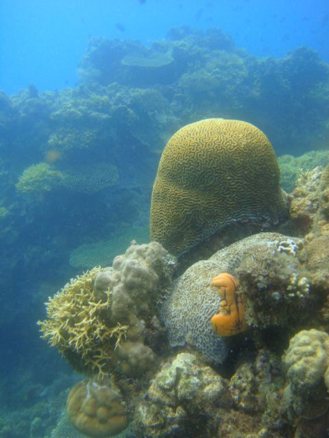 dive_and_trek_reef_sony_marinepack23