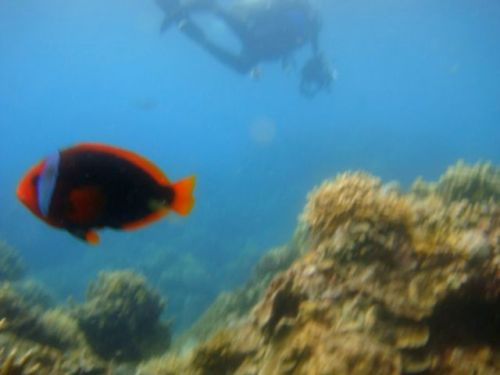 dive_and_trek_reef_sony_marinepack24