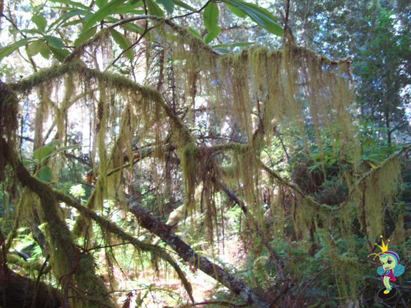 I loved how this moss was hanging from all the trees
