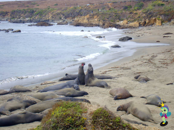 Elephant Seals hang out at the beach near Hearst Castle