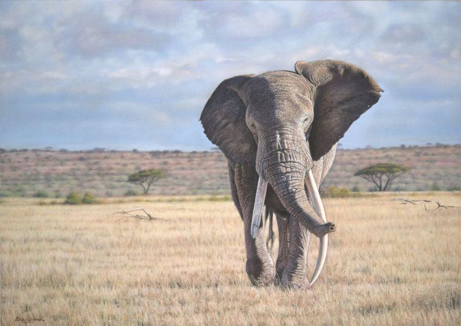 Eric-Wilson-wildlife7