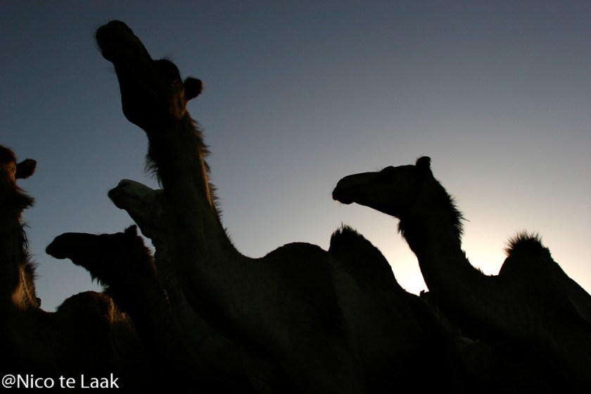 Camelmarket-photo-by-Nico-te-Laak (2)