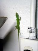 2008-03-11_lizard
