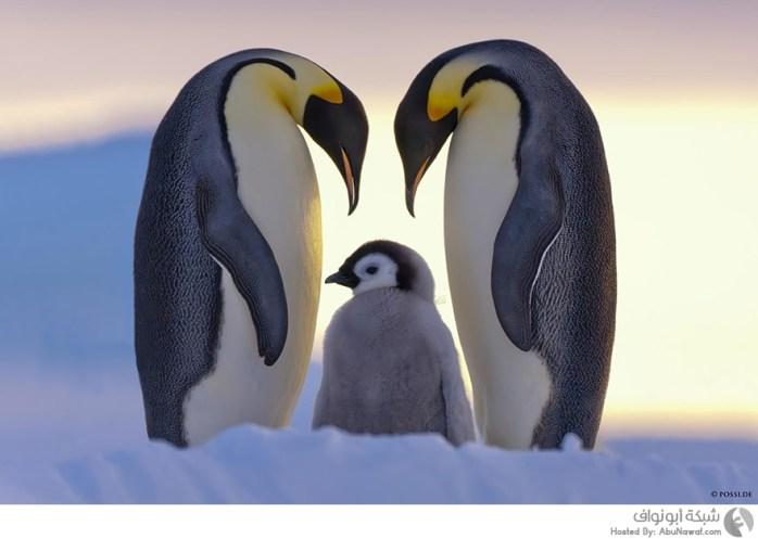 صور حيوانات قطبية
