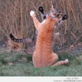 قطط يسلموا على بعض