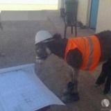 المهندس يدرس تأخير مشروع
