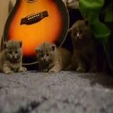 تنويم 3 قطط صغيرة في نفس الوقت