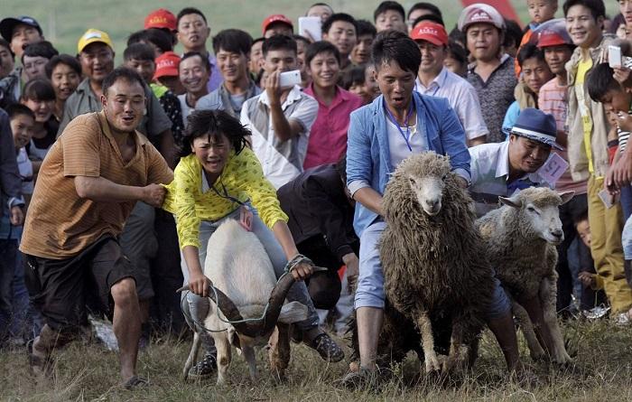 سباق الخراف