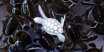 Albino-animals