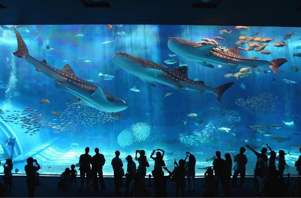 حيتان ضخمة داخل أحواض السمك