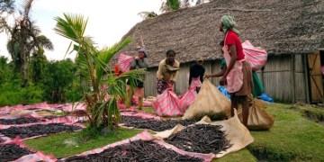 vanilla is grown in Madagascar