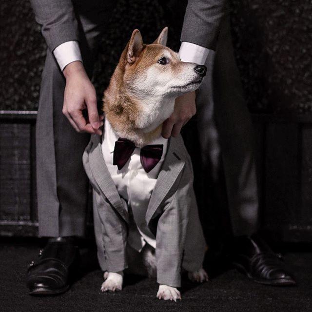 الكلب الأكثر أناقة