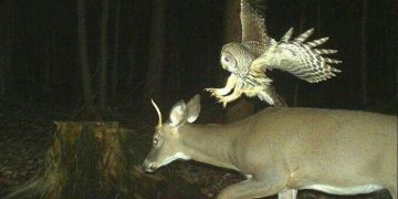 Hidden Cams Animals