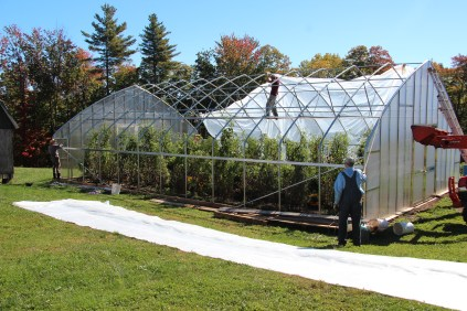 How to dress a greenhouse
