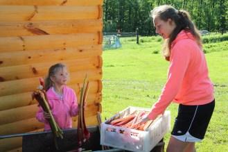 Packing Rhubarb
