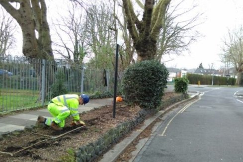 Planting a Sleeping Beauty Hedge