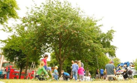 Abundance London community project Chiswick-cherry-harvesters