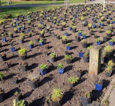 Abundance London Chiswick Piazza Planting