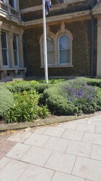 Abundance London Flag Pole Garden Plants