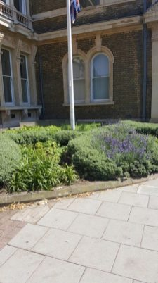 Abundance London Flag Pole Garden Plants