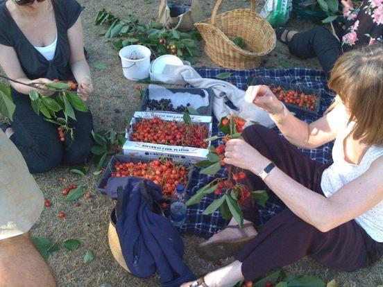 Abundance London cherry picking