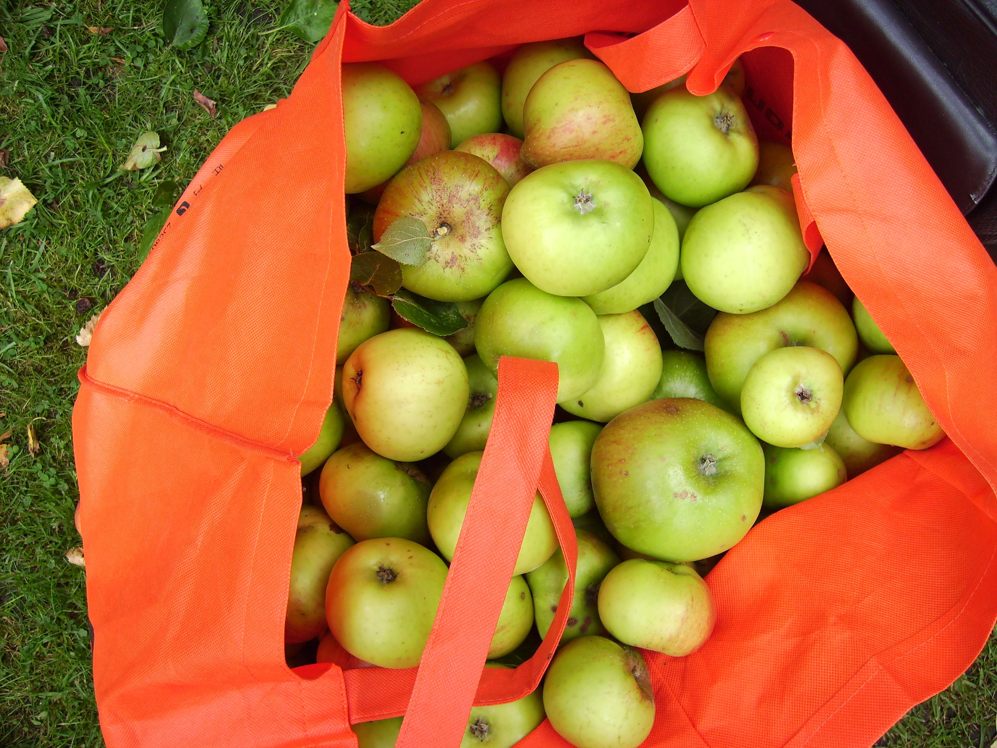 Bag of cooking apples