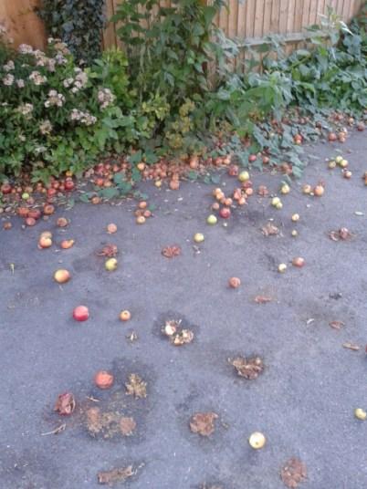 20150808_192229 - concrete apples