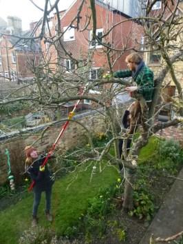 team-tree-pruning-rs-house-feb-2016-abundance