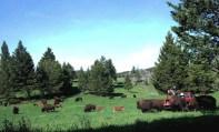 11904_afternoon-in-buffalo-gulch-web.jpg