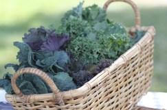 12404_Gardeners-Mkt-Kale-6-12-14-218.jpg