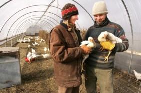 12787_HOF-with-Chickens.jpg