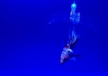 لعشاق الصيد – بالفيديو MIT تصنع روبوت غير مرئي لالتقاط الأسماك