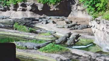 Crocodilos, leões, antílopes, gnus. dezenas de espécies no Animal Kingdom.