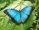 """""""Butterfly Dance"""" by Yanni"""