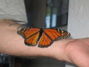 Butterfly on Patrick's arm