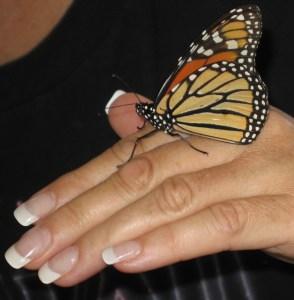 Monarch on deck