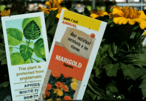 Neonicotinoid Plant Label for Marigold