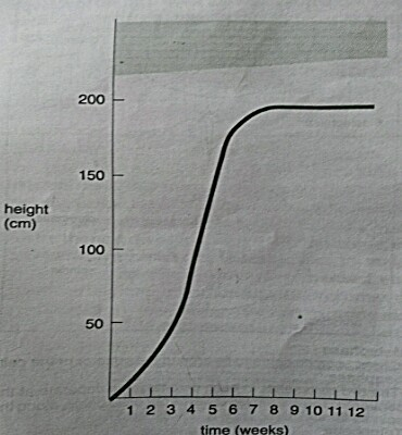 Growth curve of plant stem