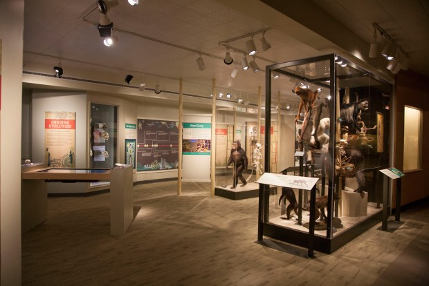 CMNH exhibit image