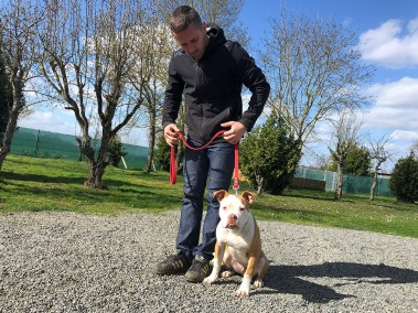academiedeschiens - Educateur canin Nantes