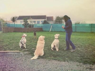 evenement academie des chiens 5