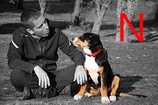 Formation éducateur canin
